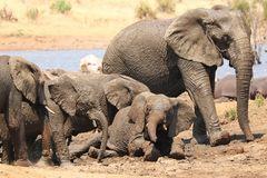 Elefants in Pilanesberg 2639