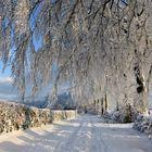 Elégance hivernale