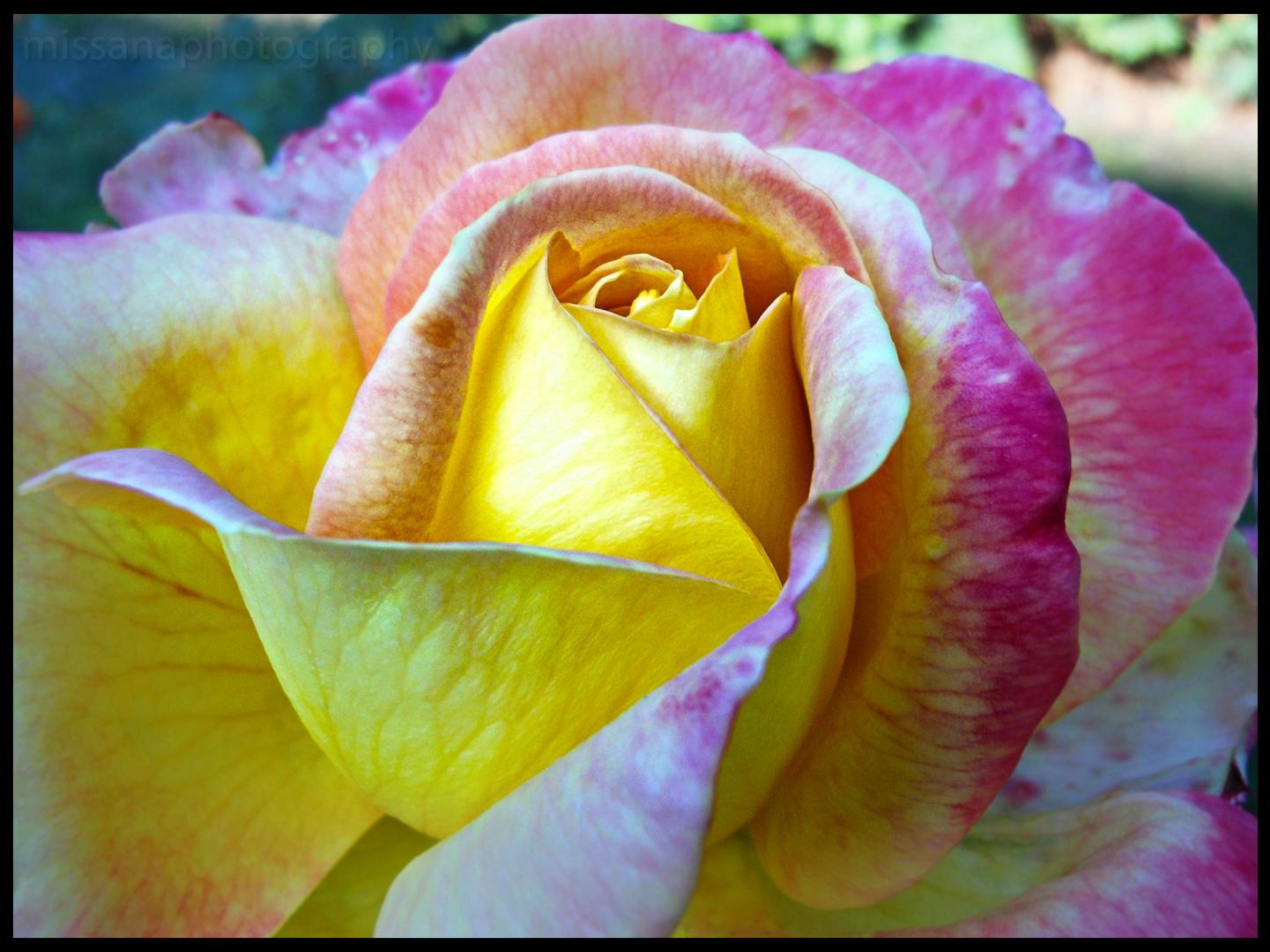 elegance is a glowing inner peace