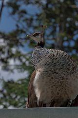 Eleganz im Vogelreich