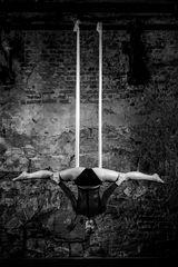 Eleganz und Akrobatik