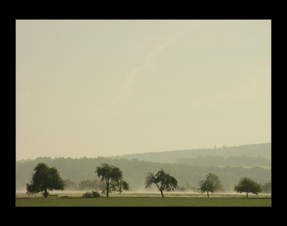 ...elegisch- verträumter Nebelmorgen am Solling...