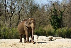 """""""Eléphant au pays des merveilles :-)"""""""