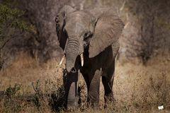 //elephant//
