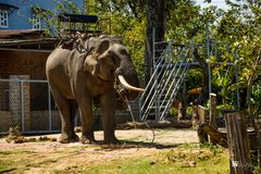 Elephant in Daklak