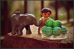 Elephant likes watermelons/L'elefante ama le angurie