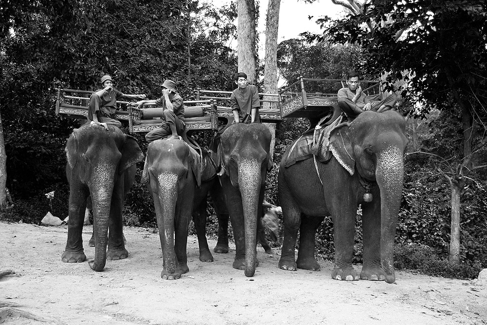 Elephant parking area