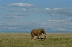 elephant solitaire ....