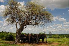 Elephant Tree...