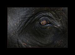"""""""Elephant's eye"""""""