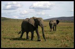 ... Elephants, Massai Mara, Kenya ...