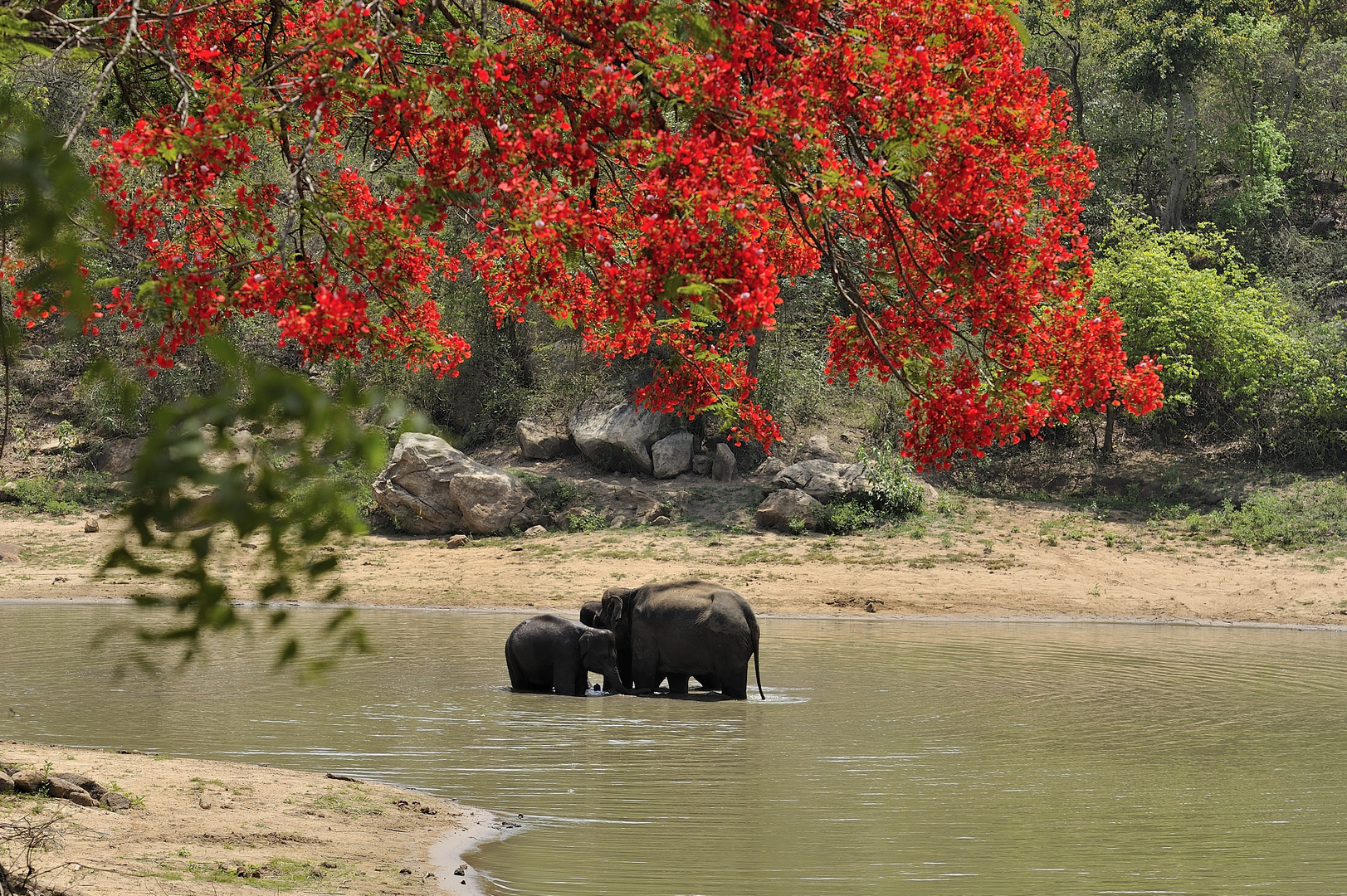 Elephantsbath