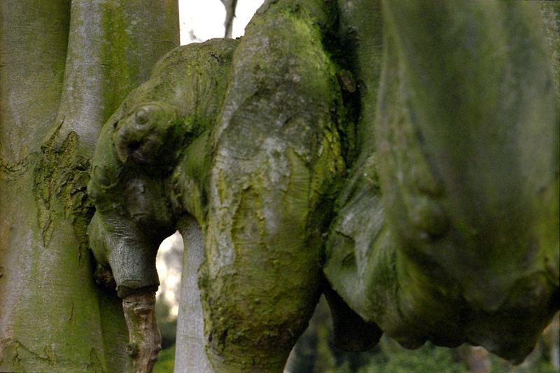 elephaum
