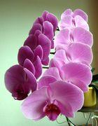 ...elf Blüten müsst Ihr sein...1...