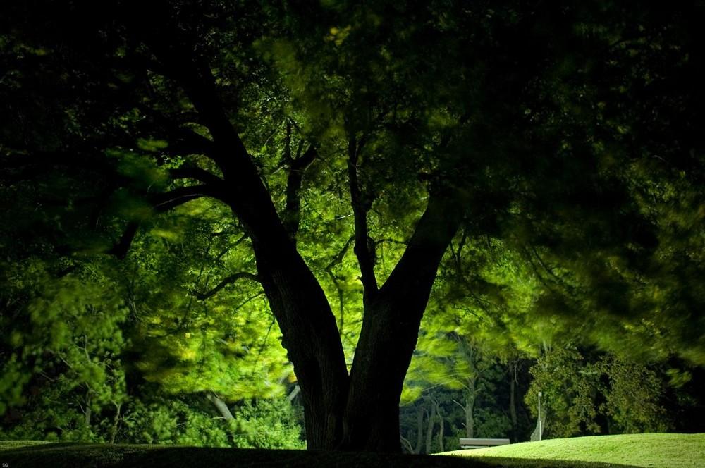 Elfenlicht