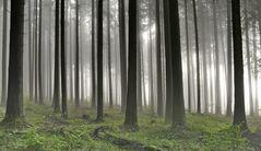 elfenwald