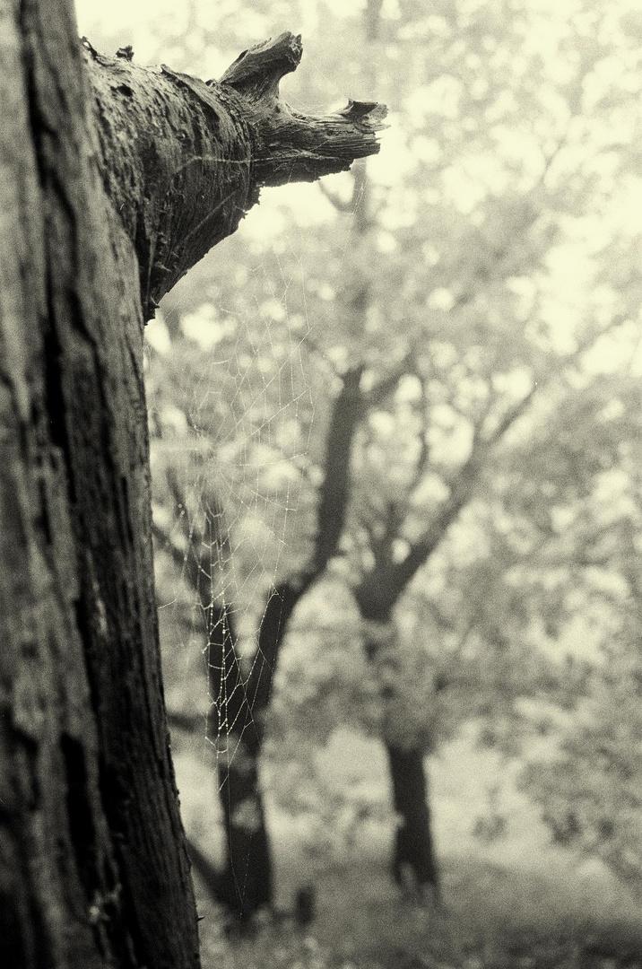 Elfenwald, der Bewohner
