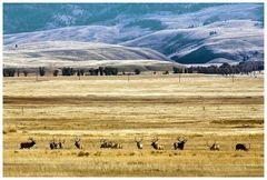 Elk Refuge, Jackson Hole