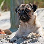 Ellie am Strand