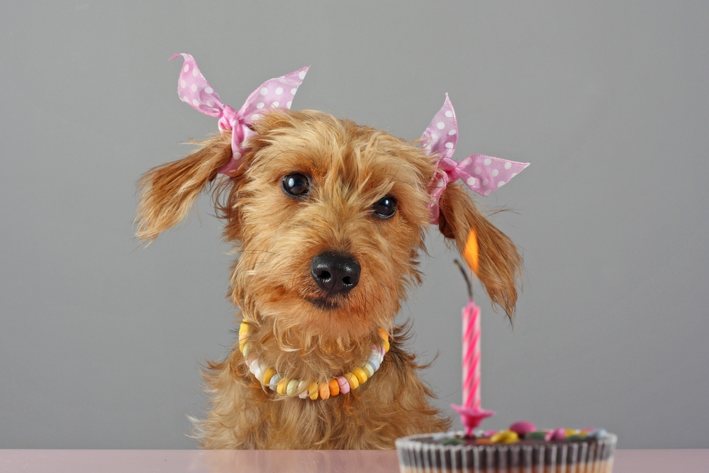 Ellis Erster Geburtstag Foto Bild Tiere Haustiere Hunde