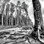 Else und der Gespensterwald