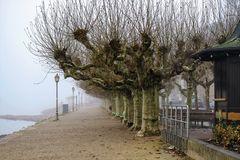Eltville - Rheinuferpromenade im Dezember