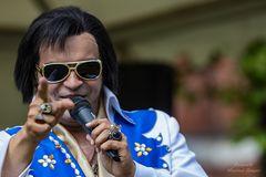 Elvis-Imitaor - SHELVIS (2)
