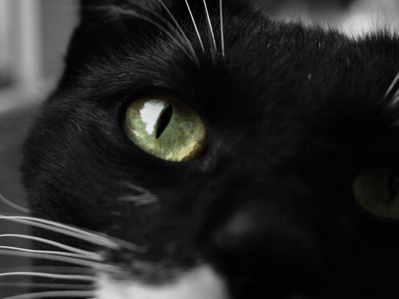 Elvis my cat