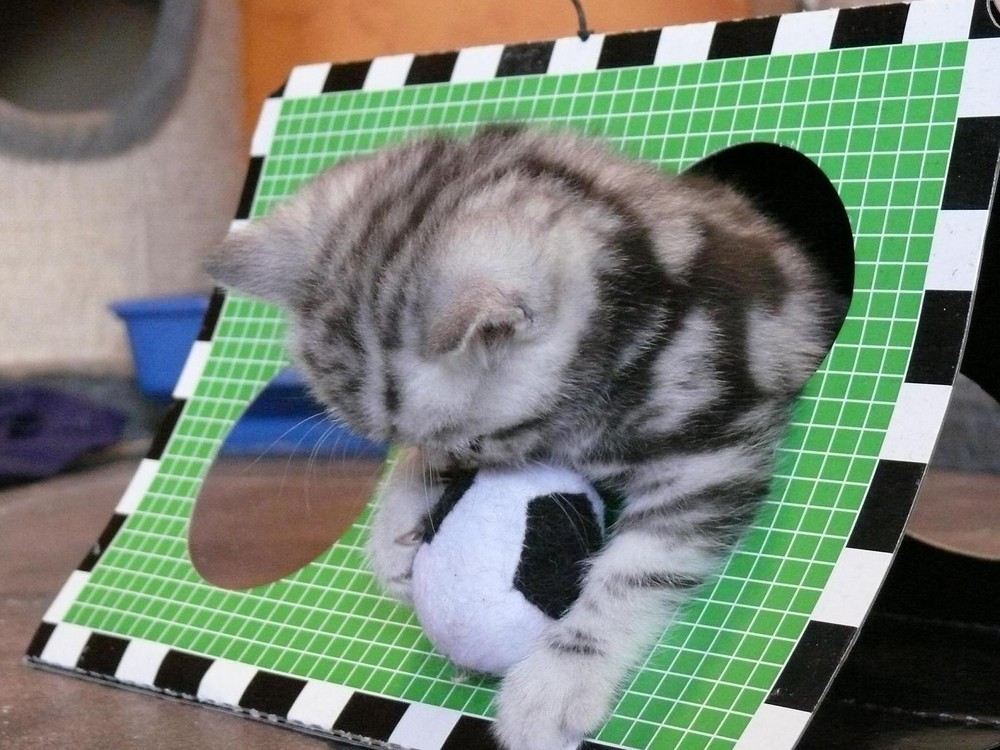 EM-Katze