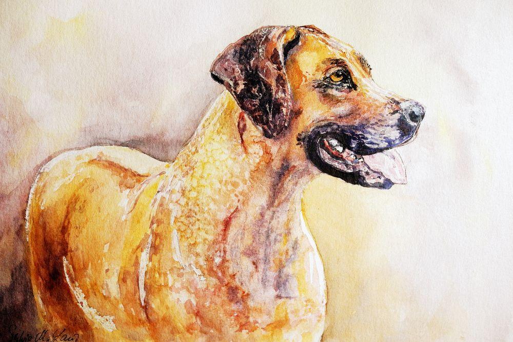 Emil - ein Hundeportrait