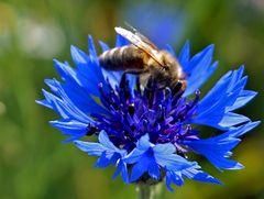 Emisg,emsig waren die Bienen