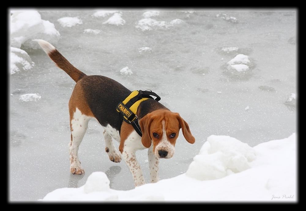 Emma - Auf dem Eis am Elbeseitenkanal