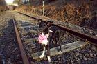 Emma auf der Vennbahn