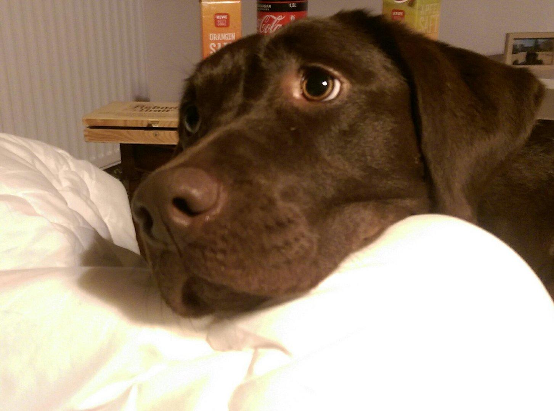 Emma Bettelhund ..;)