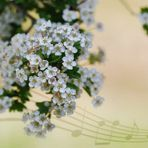 Emotional journeys - Spring