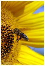 Emsige Biene