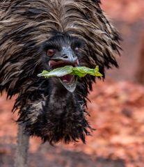 Emu: Ich möchte so gerne einen Schnurrbart haben