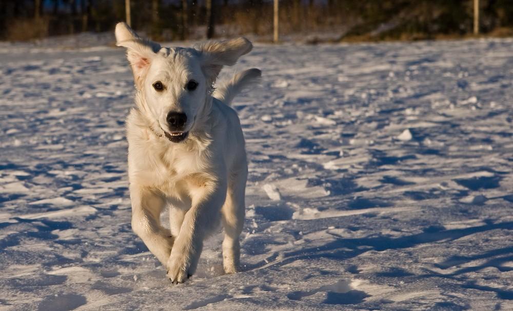 EMY - unser Hund