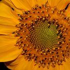 en amarilo1