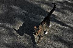 en campagne , à part  l ombre d un chat ...personne!