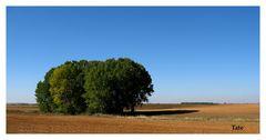 En campos de Castilla