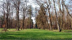 En el bosque # Im Wald