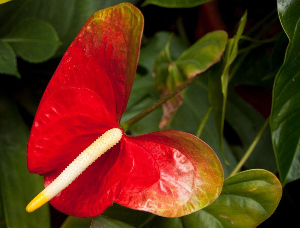 En forma de Mariposa