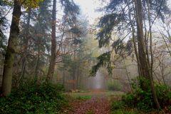 """"""" En forêt """""""