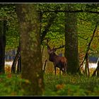 ...En forêt profonde...