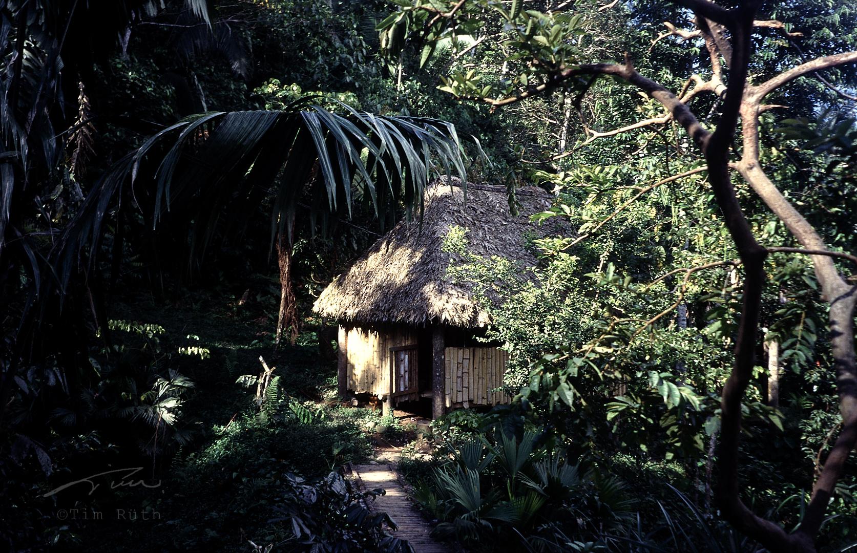 En la selva (1)