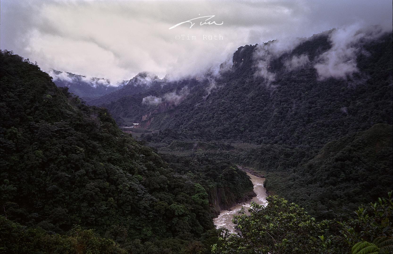 En la selva (2)