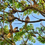 En lo alto del árbol