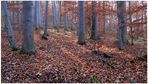en recuerdo del otoño (zur Erinnerung an den Herbst)
