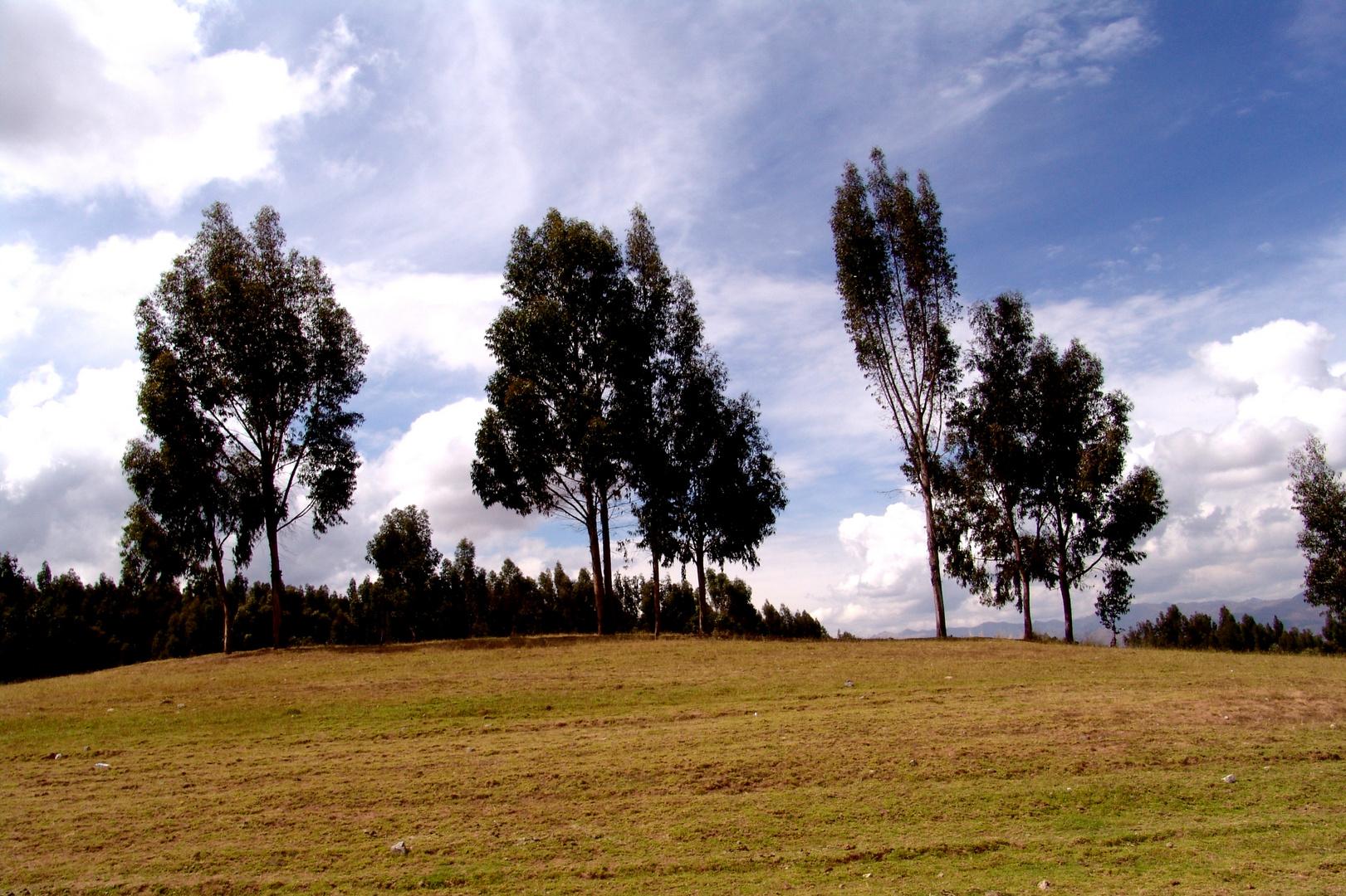 En una de las rutas Cusqueñas , sobre el lomo de un caballo.